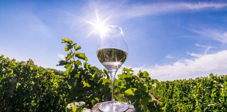 Turismul viticol în România – ce crame poți vizita în Muntenia