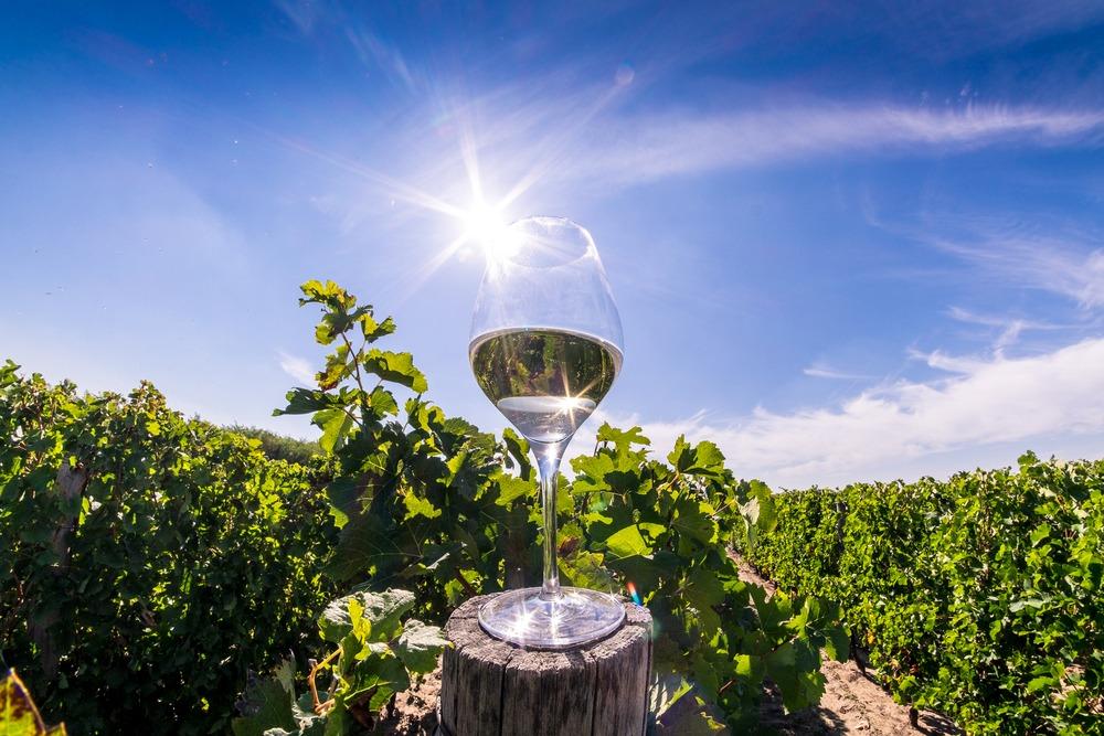 Turismul viticol in Romania