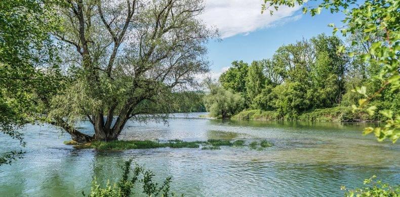 Pădurea Letea, ținutul exotic din inima Deltei Dunării